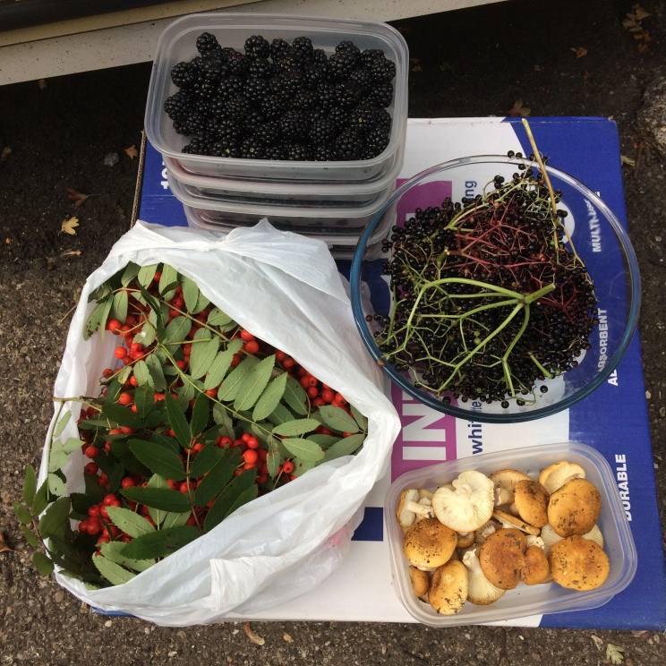 Fruits of a Recent Forage!